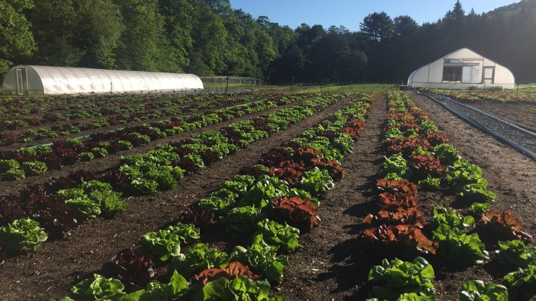 Neversink Market Farm Course