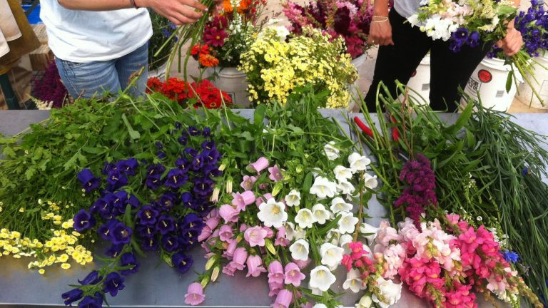 Cut Flower Farming Master Course